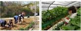 농기평, 아름다운 농촌만들기 캠페인